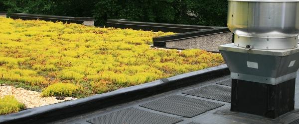 toit terrasse vegetale