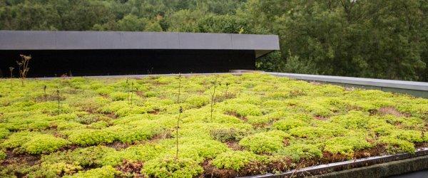 toiture vegetalisee 1